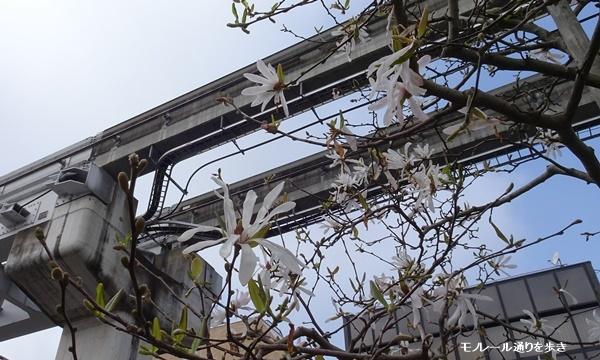 春うらら、国立・立川さくらウォーキングへ_c0051105_17295414.jpg