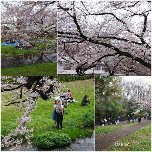 春うらら、国立・立川さくらウォーキングへ_c0051105_23124549.jpg