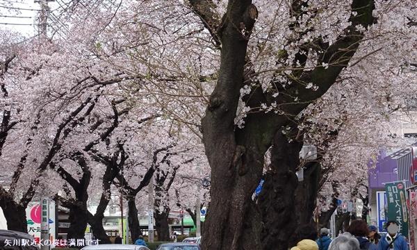 春うらら、国立・立川さくらウォーキングへ_c0051105_23503454.jpg
