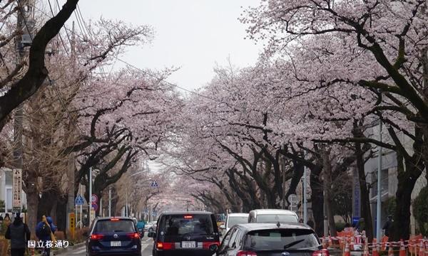 春うらら、国立・立川さくらウォーキングへ_c0051105_23543029.jpg