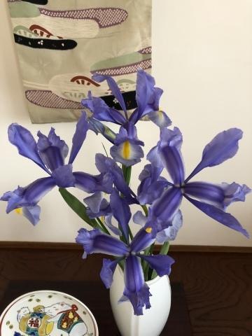 お花の名前は?_e0245805_14525171.jpeg
