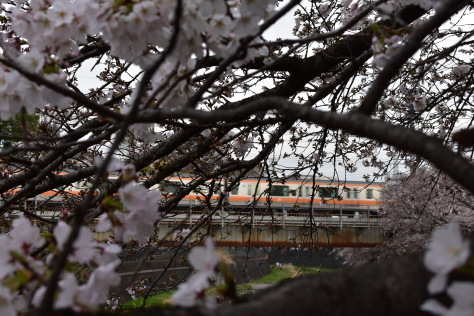 3月の終わりに残堀川の桜が咲いた!_e0148909_21420447.jpg