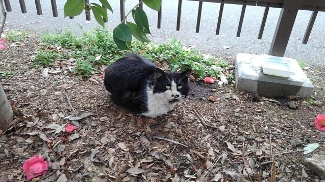 【猫】ヌシ?_f0141609_22225836.jpg