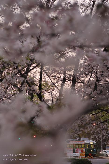桜咲く夕刻に_d0309612_00033871.jpg