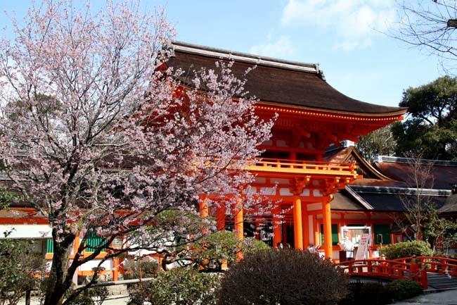 桜が揃った 上賀茂神社_e0048413_21112385.jpg