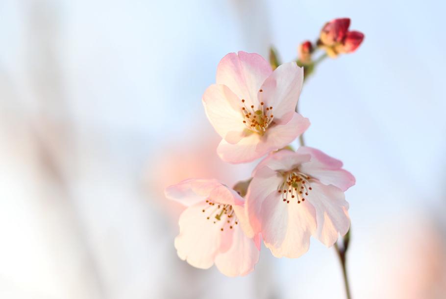 桜_e0084214_17441874.jpg