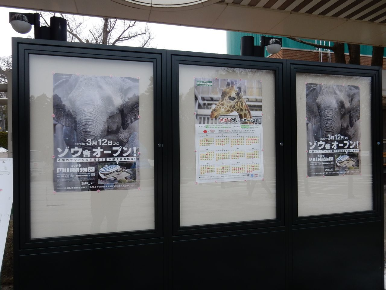 早春の円山動物園_c0025115_22455590.jpg