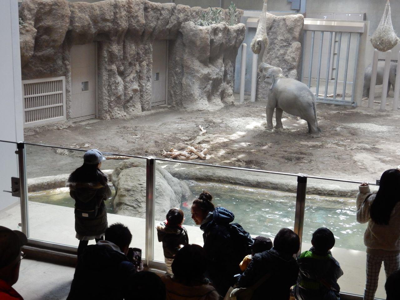 早春の円山動物園_c0025115_22463412.jpg