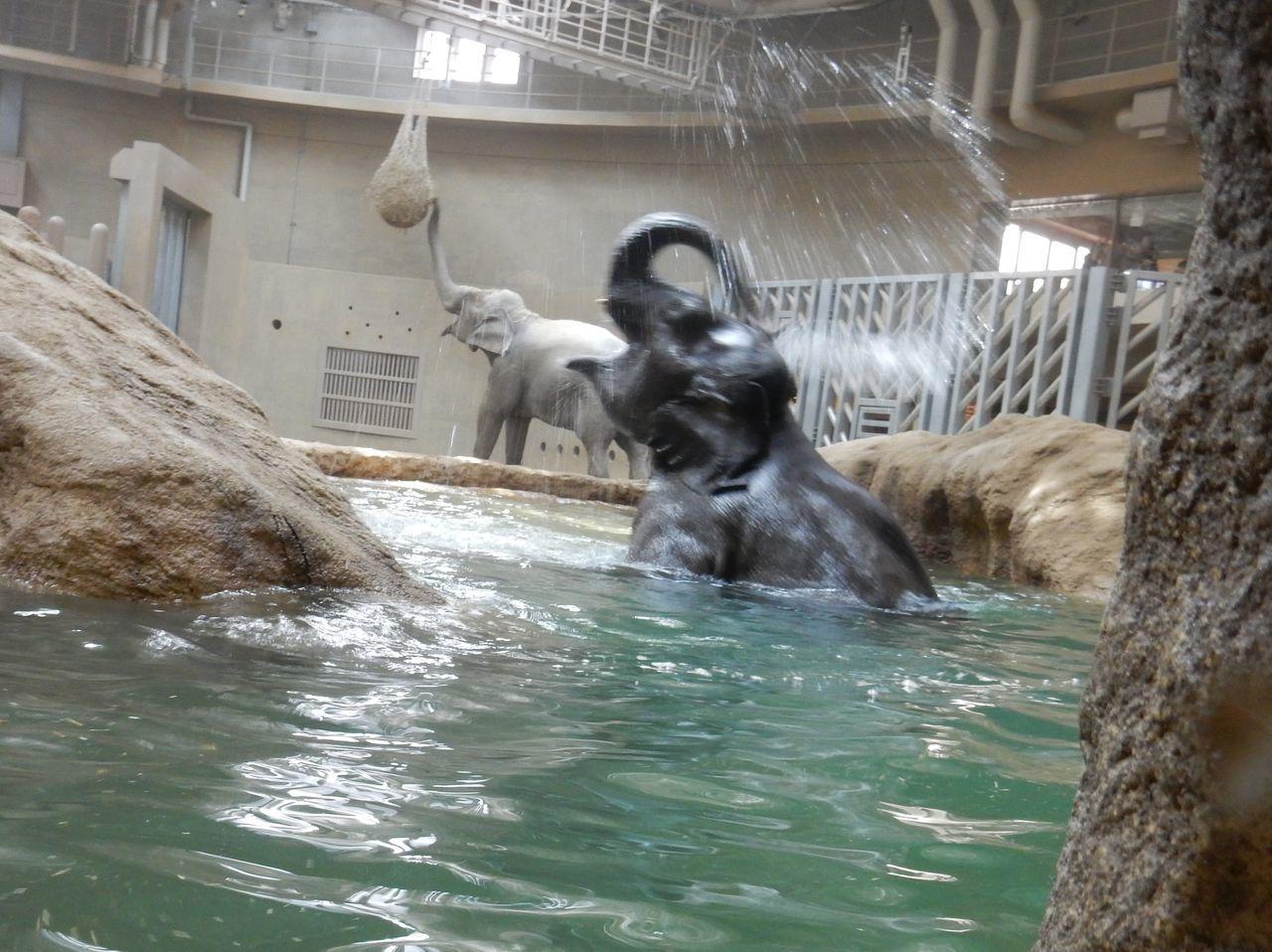 早春の円山動物園_c0025115_22463822.jpg