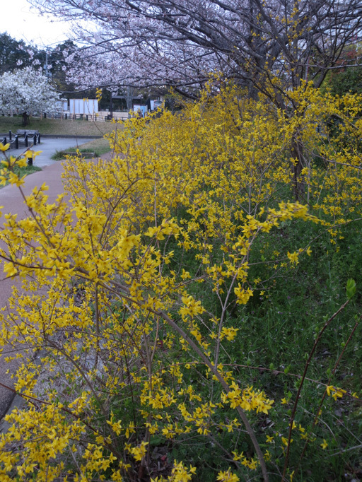 ■花冷えウォーキング、そして週替わりの夕暮れ[3/24-31]_d0190217_21560967.jpg