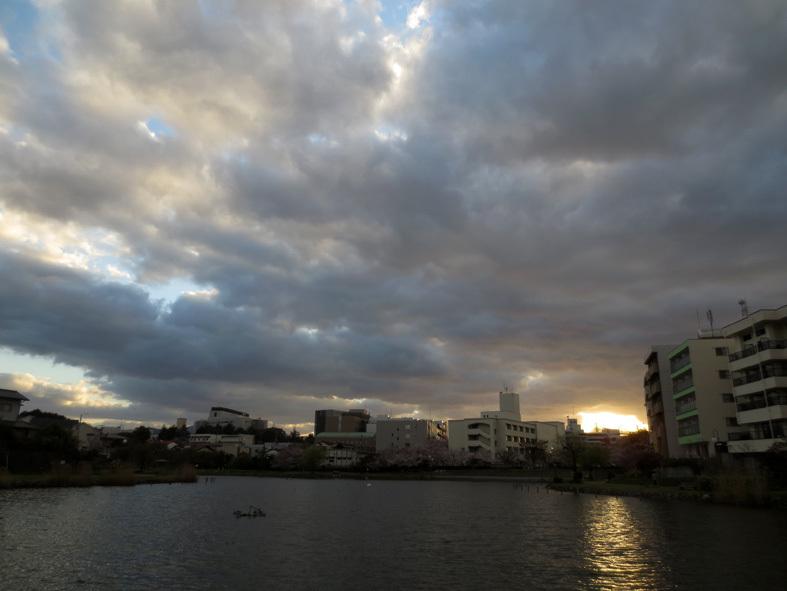 ■花冷えウォーキング、そして週替わりの夕暮れ[3/24-31]_d0190217_21582991.jpg