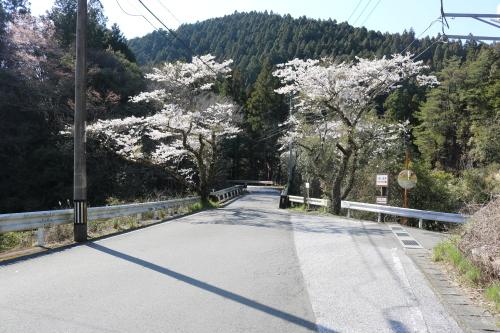 馬路村の春④_e0101917_18390631.jpg