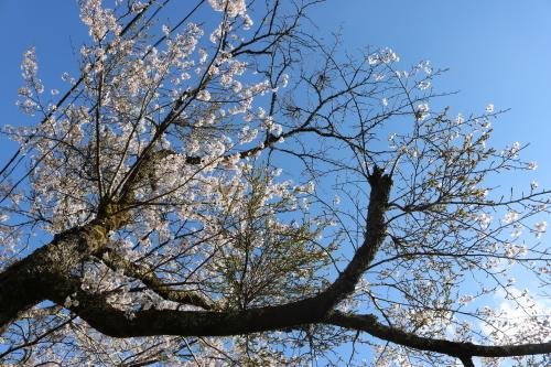 馬路村の春④_e0101917_18393965.jpg