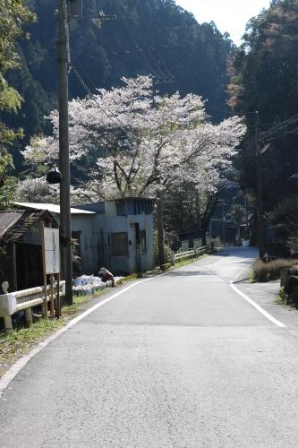 馬路村の春④_e0101917_18395317.jpg