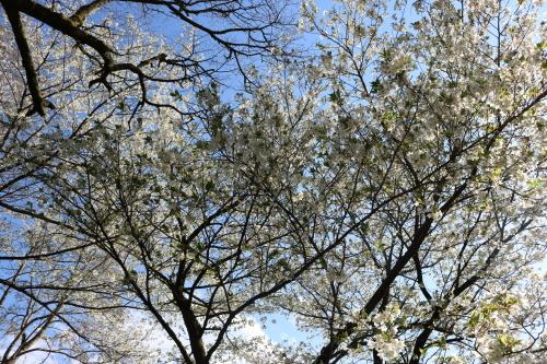 馬路村の春④_e0101917_18435052.jpg