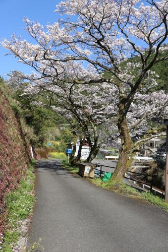 馬路村の春④_e0101917_18442253.jpg