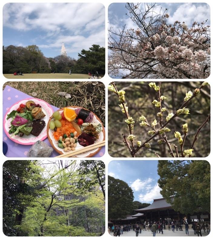 お花見*青空サンガ_d0085018_19555134.jpg