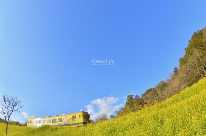 さよならムーミン列車_f0321522_23245679.jpg
