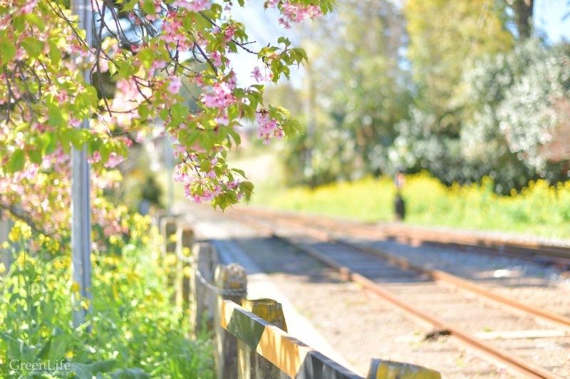 さよならムーミン列車_f0321522_23300646.jpg