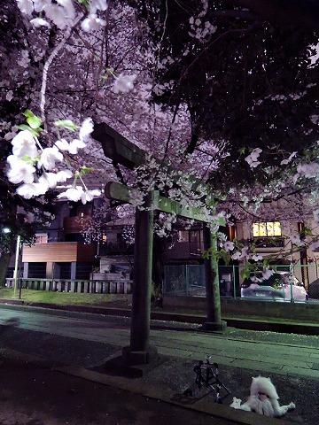 お花見散歩_c0062832_15293611.jpg