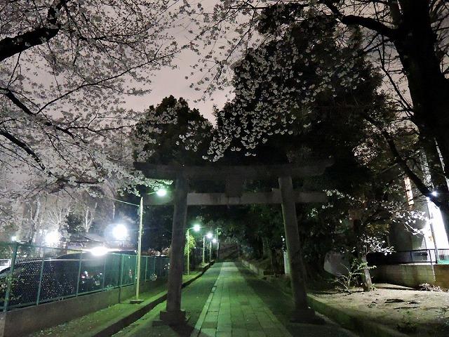 お花見散歩_c0062832_15295238.jpg