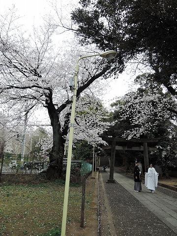 お花見散歩_c0062832_15295244.jpg