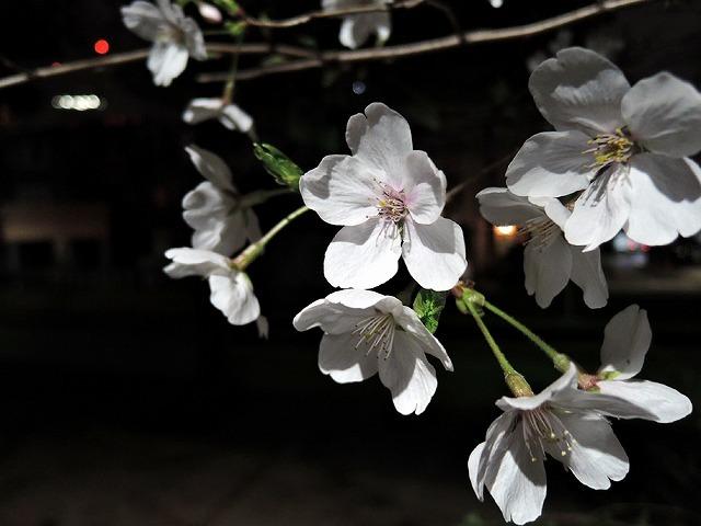 お花見散歩_c0062832_15295394.jpg