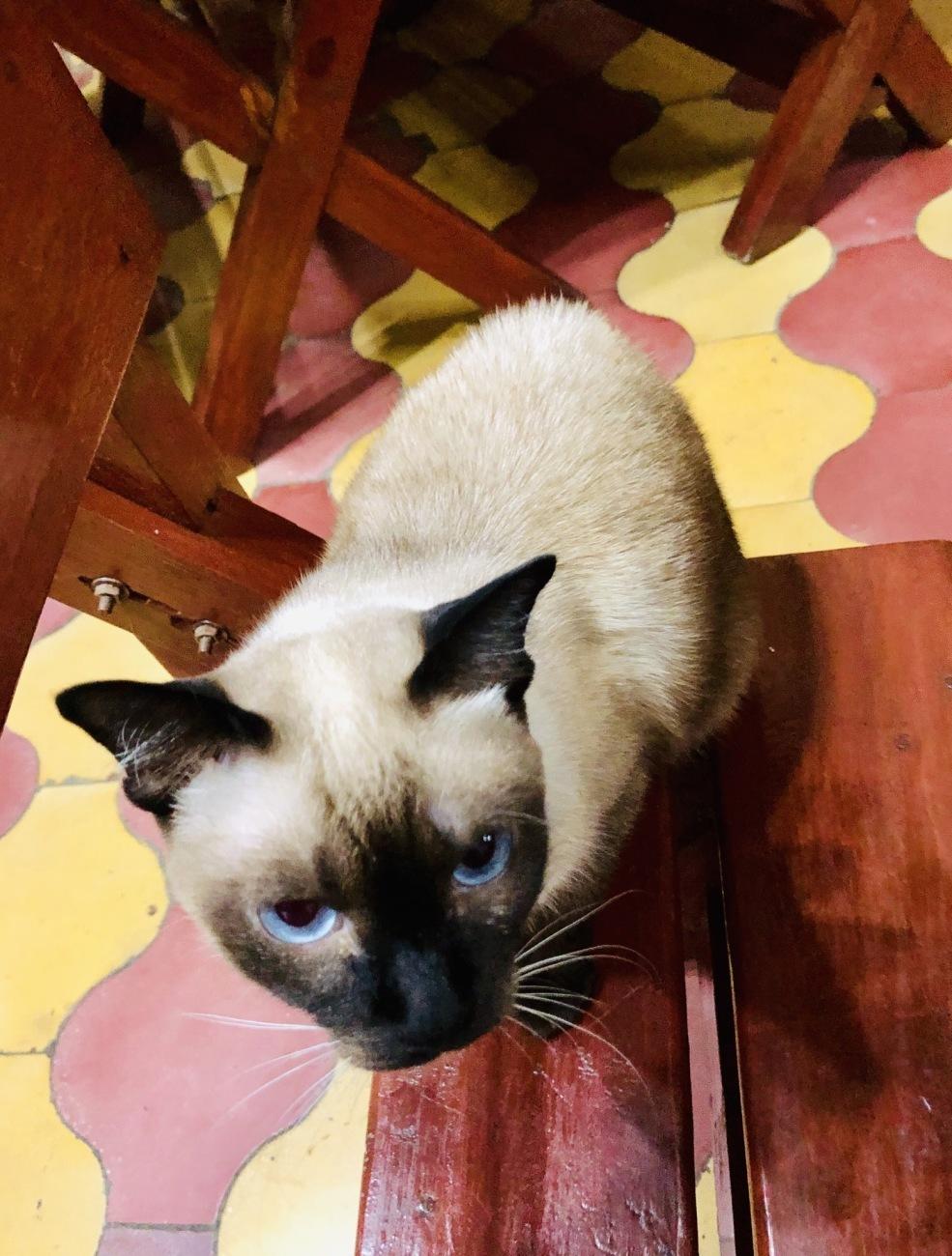 キューバの猫2019_a0103940_13320252.jpeg