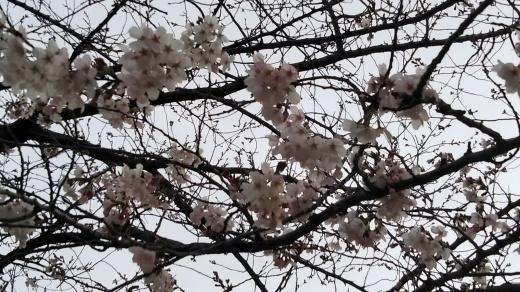 春_e0179943_21511104.jpg