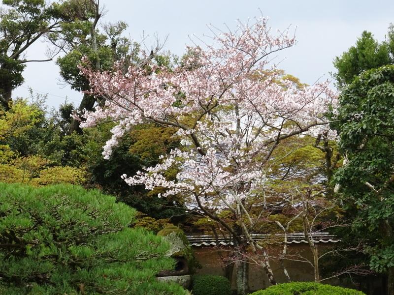 春本番_f0101949_15074411.jpg