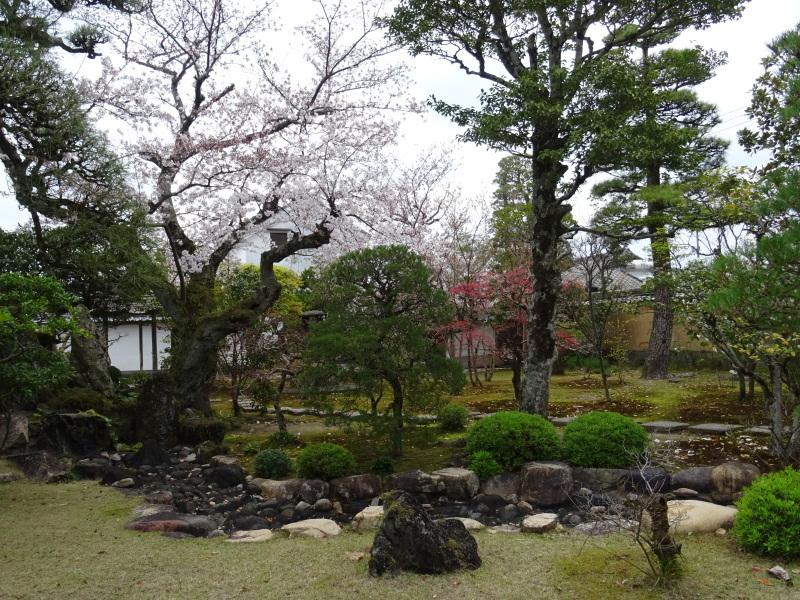 春本番_f0101949_15091650.jpg