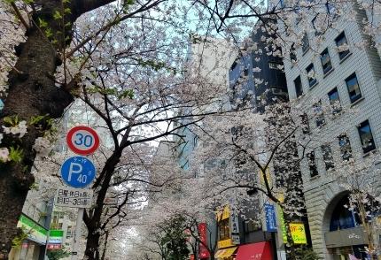 東京駅八重洲北口 さくら通り♪_c0151053_17520753.jpg