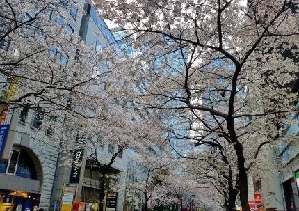 東京駅八重洲北口 さくら通り♪_c0151053_17523426.jpg