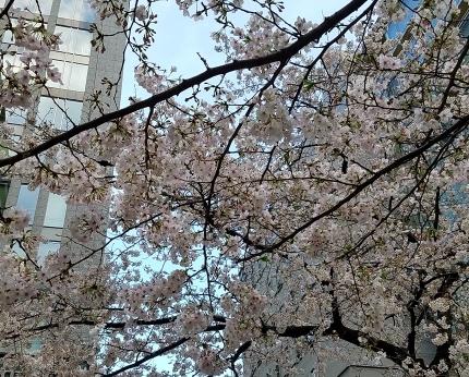 東京駅八重洲北口 さくら通り♪_c0151053_17540370.jpg