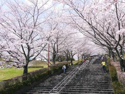 菊池公園、菊池神社の桜photoコレクション 2019_a0254656_18035037.jpg