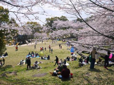 菊池公園、菊池神社の桜photoコレクション 2019_a0254656_18074522.jpg