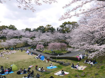 菊池公園、菊池神社の桜photoコレクション 2019_a0254656_18330516.jpg