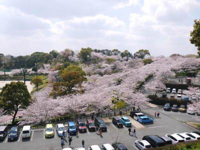 菊池公園、菊池神社の桜photoコレクション 2019_a0254656_18382563.jpg
