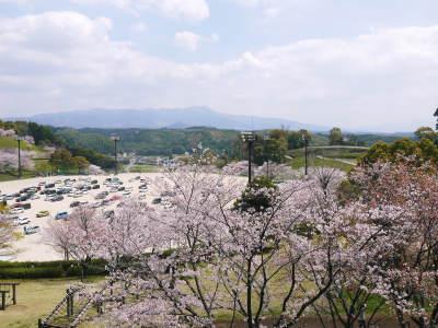 菊池公園、菊池神社の桜photoコレクション 2019_a0254656_18432862.jpg