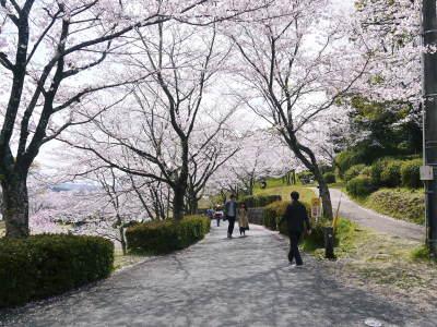 菊池公園、菊池神社の桜photoコレクション 2019_a0254656_18470187.jpg