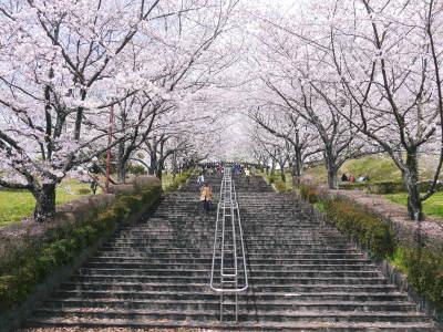 菊池公園、菊池神社の桜photoコレクション 2019_a0254656_18484106.jpg
