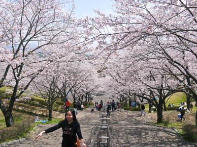 菊池公園、菊池神社の桜photoコレクション 2019_a0254656_18525594.jpg