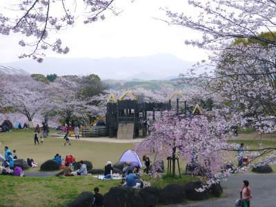 菊池公園、菊池神社の桜photoコレクション 2019_a0254656_18564790.jpg