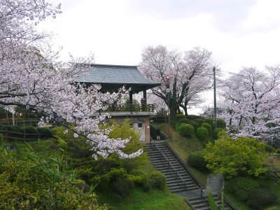 菊池公園、菊池神社の桜photoコレクション 2019_a0254656_19012650.jpg