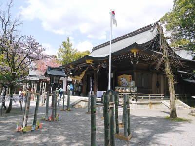 菊池公園、菊池神社の桜photoコレクション 2019_a0254656_19073092.jpg