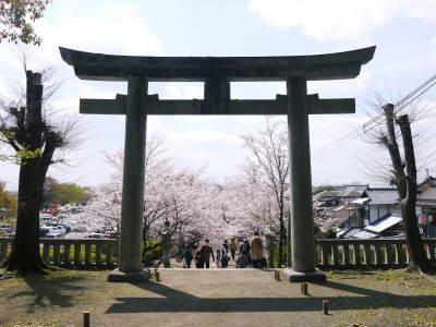 菊池公園、菊池神社の桜photoコレクション 2019_a0254656_19114674.jpg