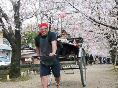 菊池公園、菊池神社の桜photoコレクション 2019_a0254656_19165507.jpg