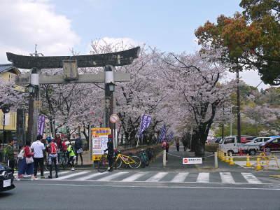 菊池公園、菊池神社の桜photoコレクション 2019_a0254656_19194402.jpg