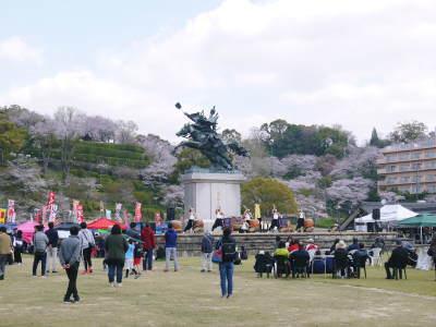 菊池公園、菊池神社の桜photoコレクション 2019_a0254656_19215832.jpg