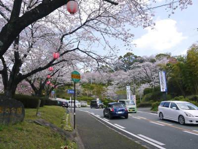 菊池公園、菊池神社の桜photoコレクション 2019_a0254656_19253280.jpg